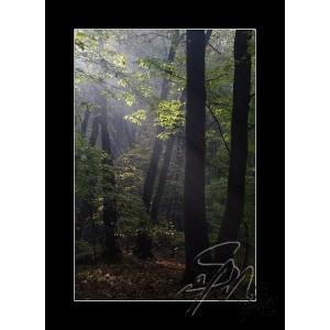 Světlo v lužním lese